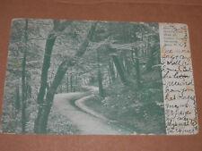 ITHACA NY - 1905 POSTCARD - GOLDWIN SMITH WALK on CAMPUS CORNELL UNIVERSITY