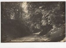 Blackwell Hollow East Grinstead RP Postcard  219a