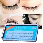 Natural C Curl Black Individual Silk W Lash False Eyelash Extension Women Set