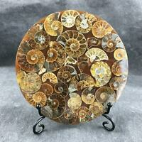 Top! Natural ammonite fossil conch Crystal specimen healing+stand 1PC