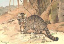 CATS. Wild cat 1893 old antique vintage print picture