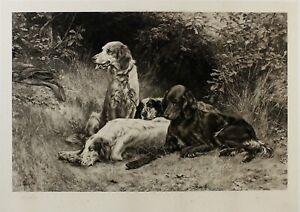 1900 Thomas Blinks Three Setters dogs RARE photogravure SIGNED family provenance