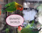 bmwpet world