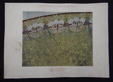 PLANCHE 58 DECORATION PICTURALE Rideau de théâtre par BERGERET Art Nouveau