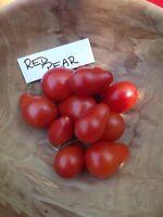 Red Pear Tomate - 10+ Samen - ERTRAGREICH und FEIN!