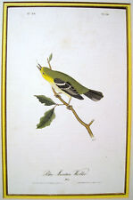 "John James Audubon: ""Blue Mountain Warbler"" 1844"