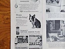 1955 Sergeant's Scratch Powder Ad Boston Terrier Dog Puppy