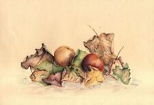 NATURA MORTA FRUTTA E FOGLIE - AUTUNNO - STILL LIFE - Disegno Originale 1900