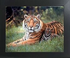 Tiger and Cubs Wildlife Animal Nature Wall Decor Framed Art Print Picture 20x24
