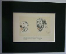 Bull Terrier Irish Wolfhound Dog Print Cecil Aldin 1934 Bookplate 8x10 Matted