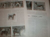 Photo article Fashions in Dogs Crufts winners 1925