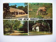 New Forest. Nr Lyndhurst, Brockenhurst, Ringwood etc. (1973)