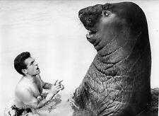 Éléphant de Mer Austral , circa 1960 Copyright D.HAUSWALD & O. HECKENROTH