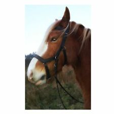Micklem  style BLACK leather bridle Extra Full size & reinsFREE POST