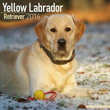 Calendrier 2016 - LABRADOR SABLE