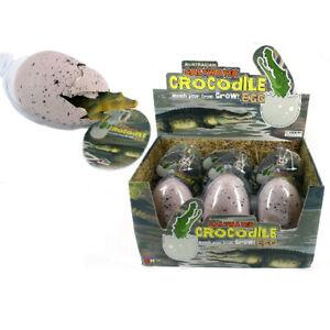 NEW Hatching Crocodile Egg | FREE Shipping