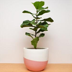 S, M, L - PLANT POT - Lightweight - Hand Painted Planter Swerve Design