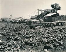 SALINAS c. 1950 - Tracteur Caterpillar à Chenille  Récolte  Californie - USA 97