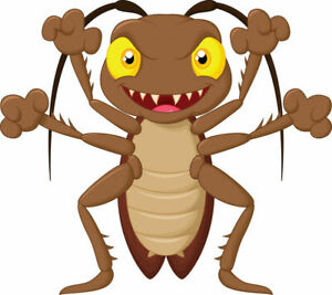 Blaptica Dubia Roach size Large 2-3 cm