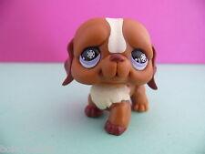 petshop chien saint bernard blanc marron / white brown dog N° 729