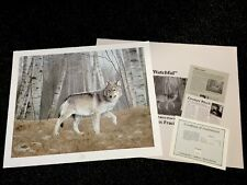 Charles Frace' WATCHFUL --(grey Wolf) 1994 SN Lithograph Edition 2500   NIF