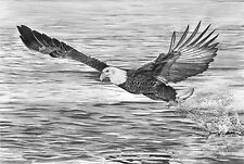 """""""Catch of the Day"""" Limited Edition, Pencil, Graphite, Realism, Eagle, 13"""" X 18"""""""