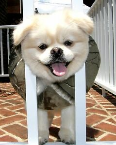 Puppy Bumpers® Keep Your Dog on the Safe Side of the Fence Ultra Camo 13-16