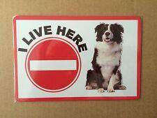 Border Collie Beware of the Dog  Design Metal Door Sign