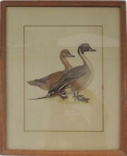 Vintage Wild Duck Hand Painting Art Print Wood Framed and Matted w Glass