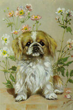 Pekingese Puppy Dog Drawing by Mabel Gear 1940's - Large New Blank 