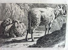 Gravure originale  moutons brebis XIXéme