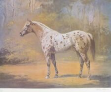 """Helen Hayse """"Appaloosa Stud"""" HAND SIGNED NUMBERED ORIGINAL Horse LITHOGRAPH"""