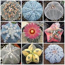 10pcs Mixed Succulent Seeds Lithops Rare Living Stones Plants Cactus Home Plant