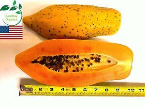 25+ Dwarf Red Lady Papaya Seeds   Organic   Non-GMO   Grown in USA