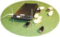 Küken Wärmeplatte aus Kunststoff (30 x 60 cm) 41092