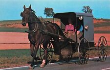 Amish Family Carriage Horse Buggy Pennsylvaia Pa Postcard
