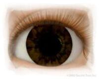 Chocolate Brown 14mm Half Round Real Eyes Reborn Baby ~ REBORN DOLL SUPPLIES