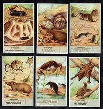 Insect Eating Mammals Cards 1956 Liebig Hedgehog Shrew Vole Elephantmouse Mole