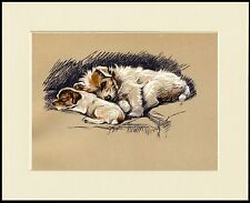 JACK RUSSELL WIRE FOX TERRIER SLEEPING.DOG AND PUP PRINT MOUNTED READY TO FRAME