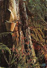 BT8269 La Saignee du pin recolte de la resine La lande           France