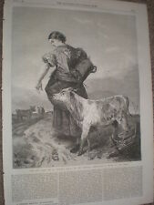 The Pet Calf by Richard Ansdell 1868 old print ref W1