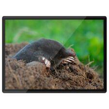 Plastic Placemat A3  - Black Mole Wildlife Animal  #44321