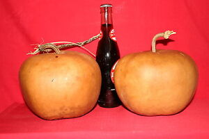 GOURDS 3  APPLE  GOURDS ( DRIED AND CLEANED)