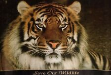BENGAL TIGER – Save Our Wildlife – POSTER w93 x h 62xm  /  37 x  24 inches  1992