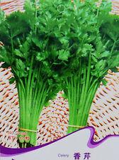 1 Pack 60 Celery Seeds Smallage Apium graveolens Chinese Celery D036