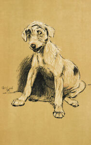 Framed Cecil Aldin Print – Lurcher Dog circa 1900 (Antique Animal Picture Art)