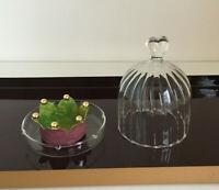 Glasgaube Haube Gloche auf Tablett Käse Butter Kaviar Praline Queen Anne Herz