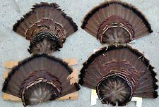 4 Vintage Unmounted Wild Turkey Tail Feather 20x16 Fans