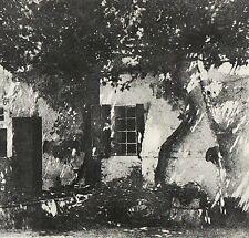 """Héliogravure - 1926 - """" La vieille vigne """"  par Albert Segre"""