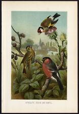 Antique Print-GOLDFINCH-BULLFINCH-FINCH-Brehm-1890